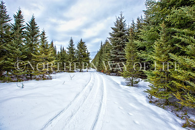 Winter path through the evergreens; Suttons Bay