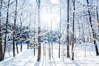 Sunny Snowfall: Suttons Bay, Michigan