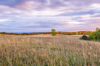 Autumn Field and Forest: Suttons Bay, Michigan
