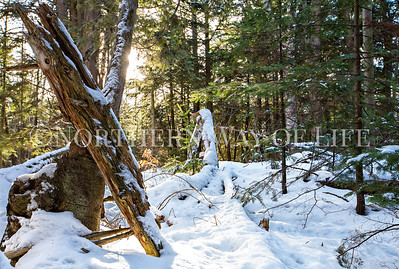 Sunny winter forest: Northport, Michigan