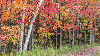 Colorful Trees: Midland, Michigan