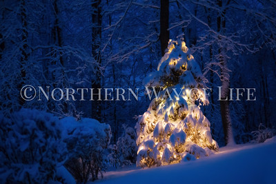 christmas tree during the blue hour; Leelanau peninsula