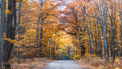 Autumn Roadway: Glen Arbor, Michigan