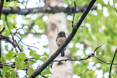 OWL_0167