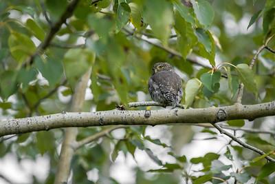 OWL_5053