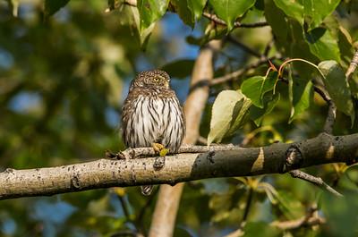 OWL_4956