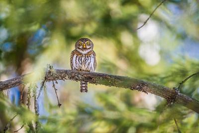 OWL_6433