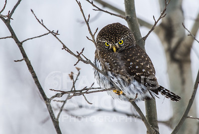 OWL_1163