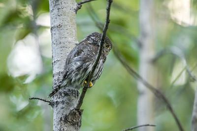 OWL_5087