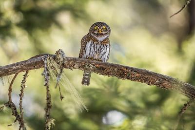 OWL_6452
