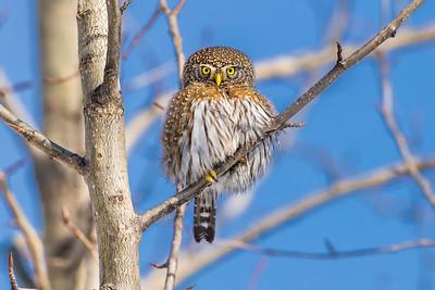 OWL_7534