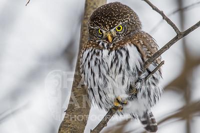 OWL_1340