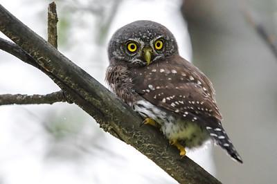 OWL_0257