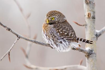 OWL_0518