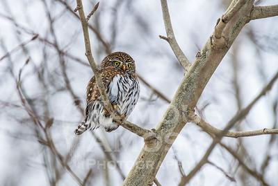 OWL_1170