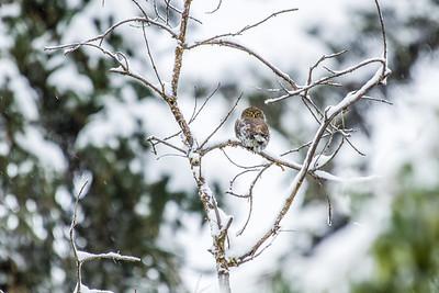 OWL_7211