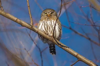 OWL_6336