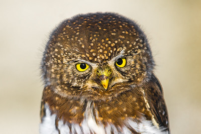 OWL_4034