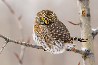 OWL_0544