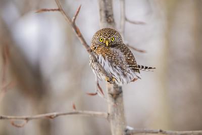 OWL_0491