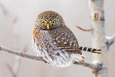 OWL_0538