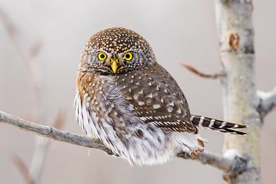 OWL_0532