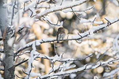 OWL_3904
