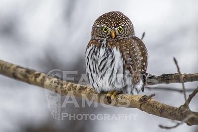 OWL_1215