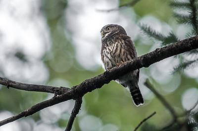 OWL_0183