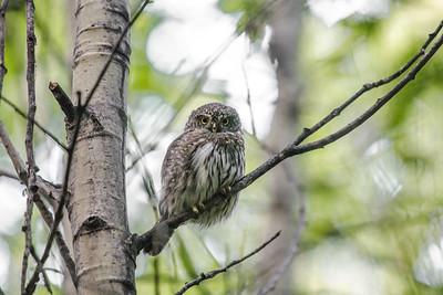 OWL_2692