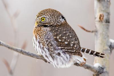 OWL_0525