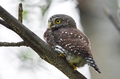 OWL_0269