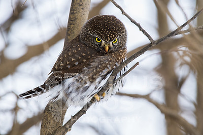 OWL_1252