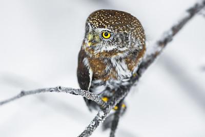OWL_3915