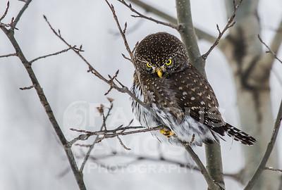 OWL_1160