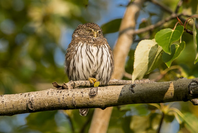 OWL_4961