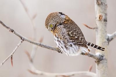 OWL_0522