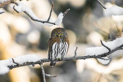 OWL_3890