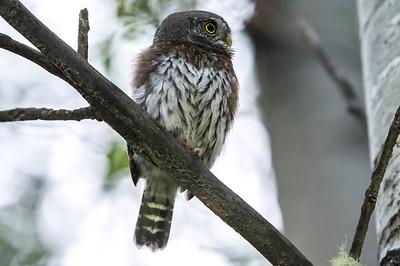 OWL_0275