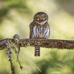 OWL_6444