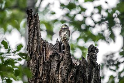 OWL_0219