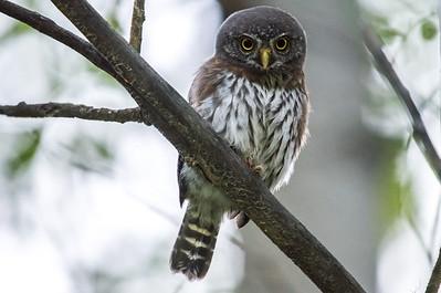 OWL_0293