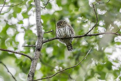 OWL_4728