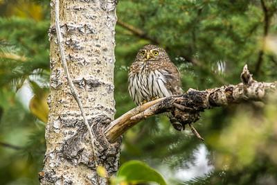 OWL_5155
