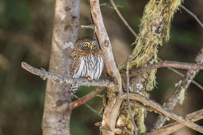 OWL_7551