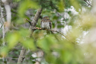 OWL_5151