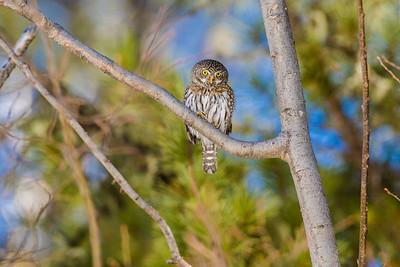 OWL_6378