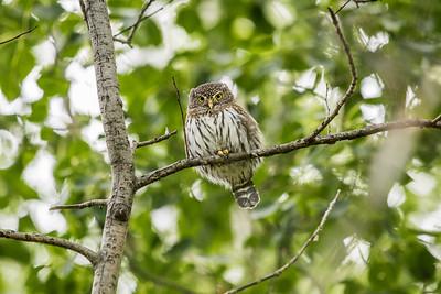 OWL_4691