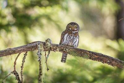 OWL_6499