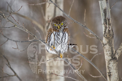 OWL_1117